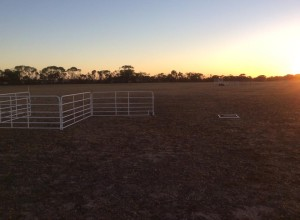 Sunrise at Strathalbyn Field Trial 2015